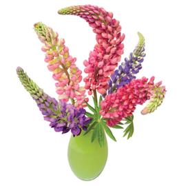 Flatflower Lupine