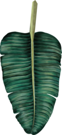 Leaf  Equator