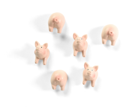 Trendform Piggy magnets