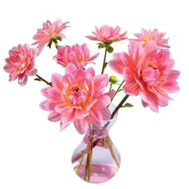 Flatflower Dahlia