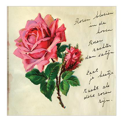 Poezie grote roos