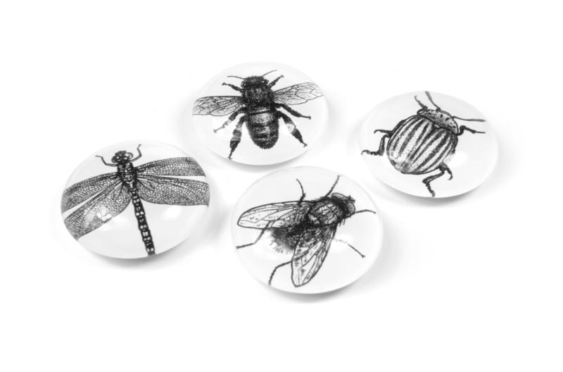 Eye magnets bug