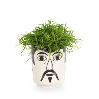 Jar Mr. Walsh