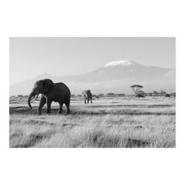 Behang Olifanten in Kenia zwart wit (vanaf)