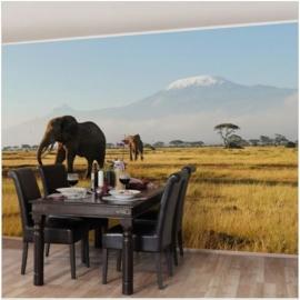 Vliesbehang Olifanten voor de Kilimanjaro in Kenia (vanaf)