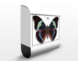 Brievenbus Vlinder