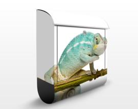 Brievenbus Blauwe Kameleon