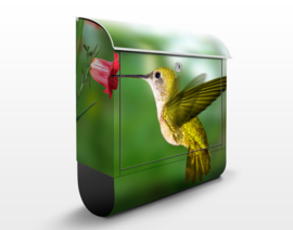 Brievenbus Kolibrie met Bloem