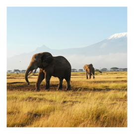 Behang Olifanten in Kenia (vanaf)