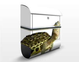 Brievenbus Schildpad