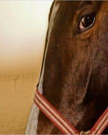 Vliesbehang Early Horse (vanaf)
