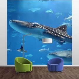 Vlies Fotobehang; Fish in the Sea (vanaf)