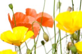 Brievenbus Eigen Tekst Wild Flowers