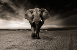 Olifant Lopend