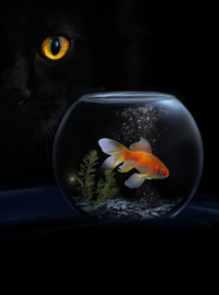 Vis met Kat