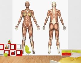 Vlies Fotobehang; Vrouwelijke Anatomie (vanaf)
