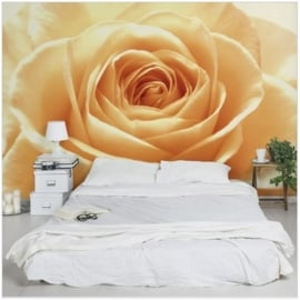 Vliesbehang Sweet Orange Rose (vanaf)