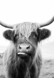 Tuinposter Happy Cow