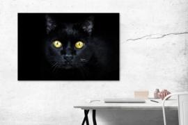 Plexiglas Zwarte Kat