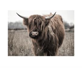 Tuinposter Schotse Hooglander