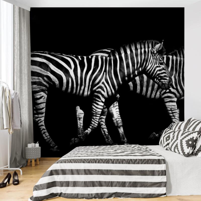 Behang Zebra in the Dark (vanaf)