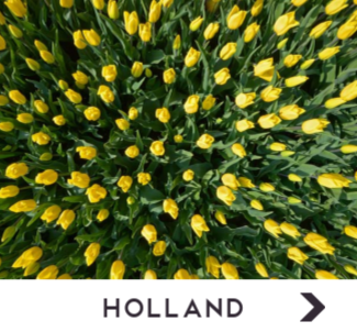 Holland Noordwand