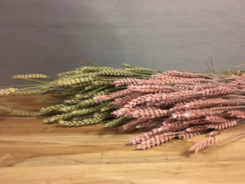 Tarwe roze