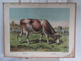 Antieke Schoolplaat van Lummel: LA VACHE - DE KOE.  1900-1916.