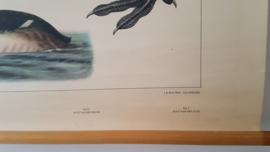 Schoolplaat op linnen: Het Naardermeer
