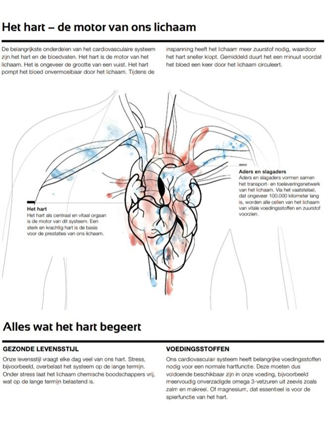 LR Health & Beauty - Hart & Bloedsomloop