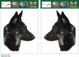 German Shepherd  shorthair / Duitse Herder Korthaar setje 2 stuks OP=OP