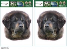 Tibetaanse  Mastiff Bruin / Tibetan Mastiff Brown setje 2 stuks