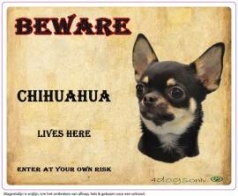 Waakbord Chihuahua kort haar zwart (Engels). Per set van 2 waakborden UITVERKOCHT