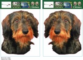 Wirehaired Miniature Dachhund / Ruw harige Dwerg Teckel setje 2 stuks
