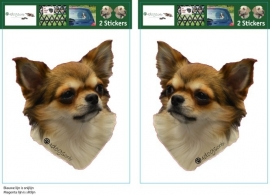 Chihuahua Lang haar setje 2 stuks UITVERKOCHT