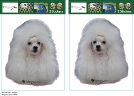 Miniature Poodle wit setje 2 stuks OP=OP