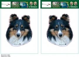 Sheltie / Shetland Sheepdog  Zwart setje 2 stuks UITVERKOCHT