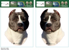 American Staffordshire Terrier Blue / Amerikaanse Stafford setje 2 stuks OP=OP