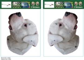 Dogo Argentino setje 2 stuks OP=OP