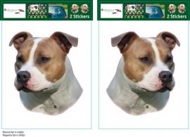 American Staffordshire Terrier 01 /Amerikaanse Stafford setje 2 stuks OP=OP