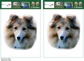 Shetland Sheepdog / Shelti Red Merle setje 2 stuks