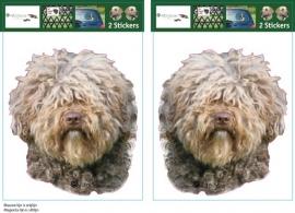 Spaanse Waterhond / Spanish Water Dog setje 2 stuks