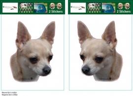 Chihuahua Blond setje 2 stuks OP=OP