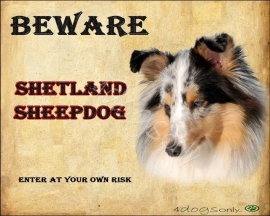 Waakbord Shetland Sheepdog / Sheltie Blue Merle (Engels) 02 OP=OP
