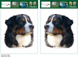 Berner Sennen / Bernese Mountain Dog setje 2 stuks OP=OP