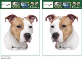 Amerikaanse Staffordshire Terrier 02 / Amerikaanse Stafford setje 2 stuks OP=OP