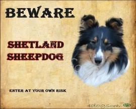 Waakbord Sheltie / Shetland Sheepdog 01 (Engels) OP=OP