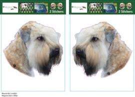 Soft Coated Wheaten Terrier setje 2 stuks