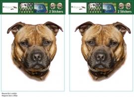 Engelse Staffordshire Bull Terrier Bruin setje 2 stuks UITVERKOCHT