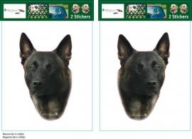 Mechelse Herder / Belgian Shepherd Dog Malinois setje 2 stuks OP=OP